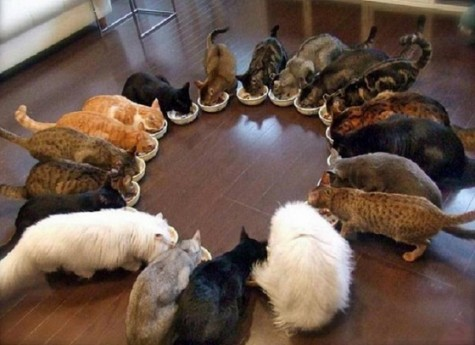 Circle-of-cats-eating
